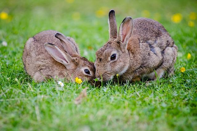 Un lapin peut il vivre en libert la maison for Avoir un lapin a la maison