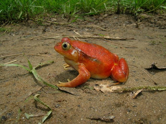 terrarium grenouilles