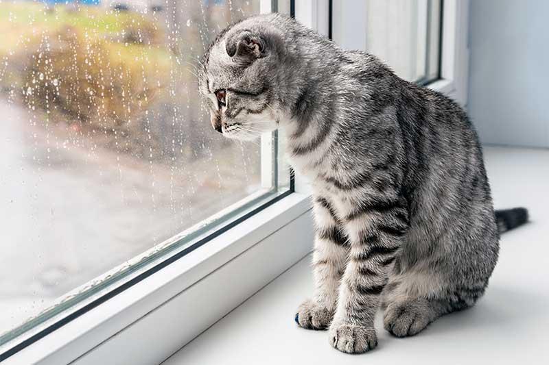 laisser un chaton seul