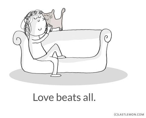 leçons de vie données par les chats