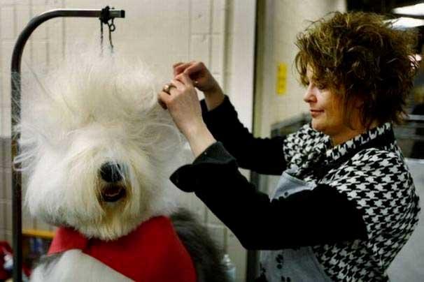 coiffure râtée chien