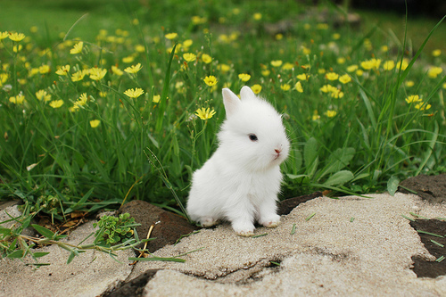 lapin peut vivre dehors en hiver