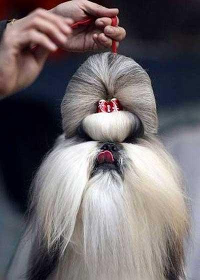 coiffeur pour chien