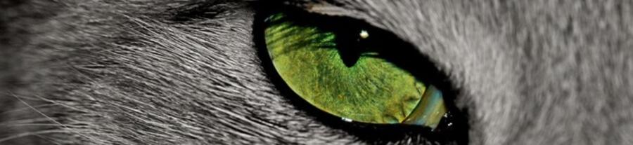 Les plus beaux yeux de chat