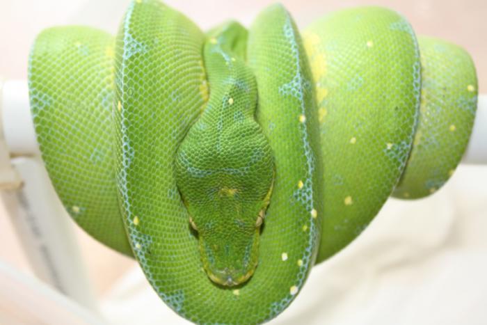 photo Python vert